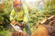 Arborist Required  S.E. Queensland
